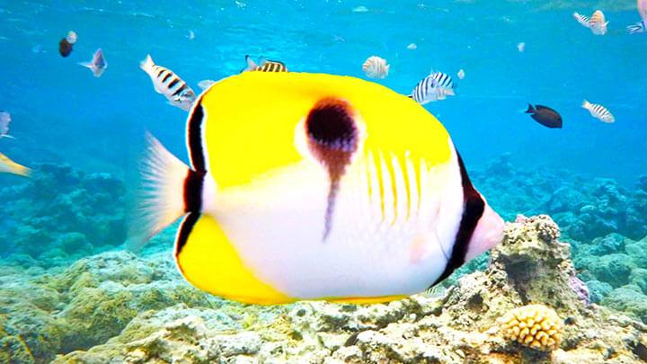 Motu Piti Snorkeling In Bora Bora