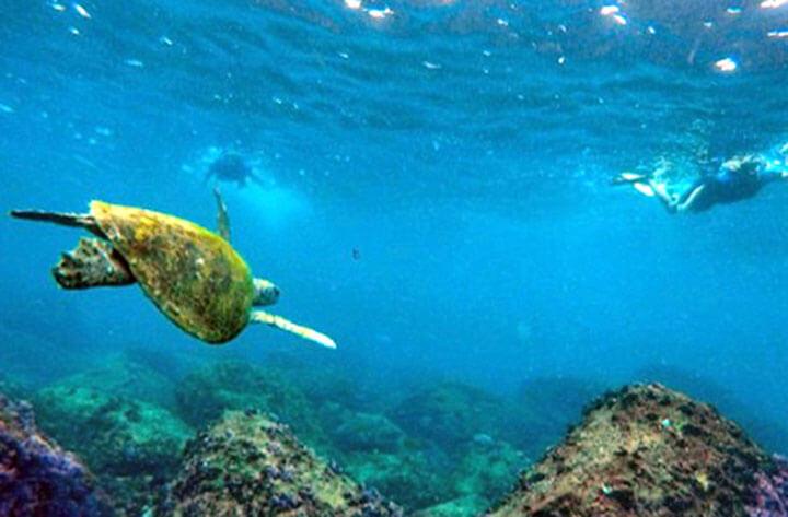Cook Island Snorkeling, Queensland, Australia