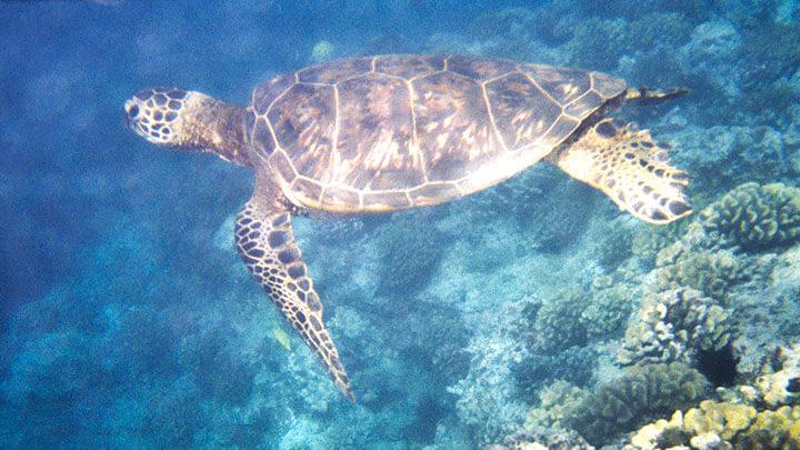 Snorkeling Big Island, Hawaii