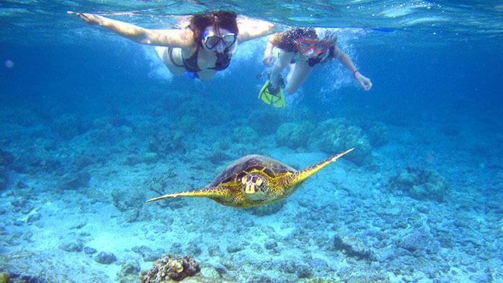 Snorkeling Kahaluu Beach Park (WikiMedia Commons)
