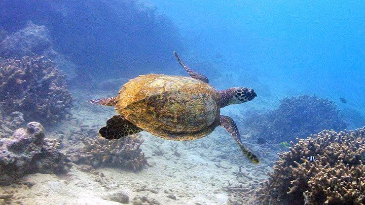 Snorkeling Fagatele Bay, American Samoa