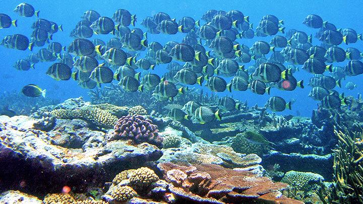 Snorkeling Aunu'u Island, American Samoa