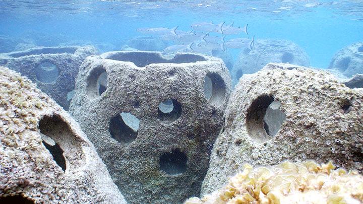Snorkeling The Marriott Resort Beach Reef Balls