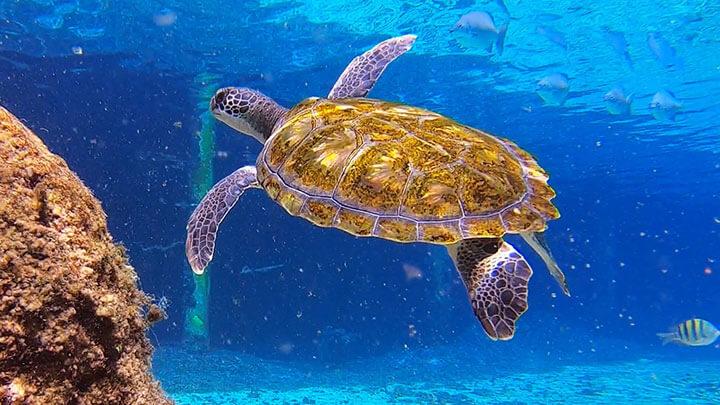 Cayman Turtle Centre Snorkeling