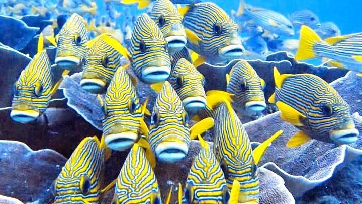 Snorkeling At Raja Ampat