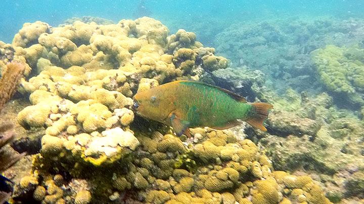 Looe Key Snorkeling
