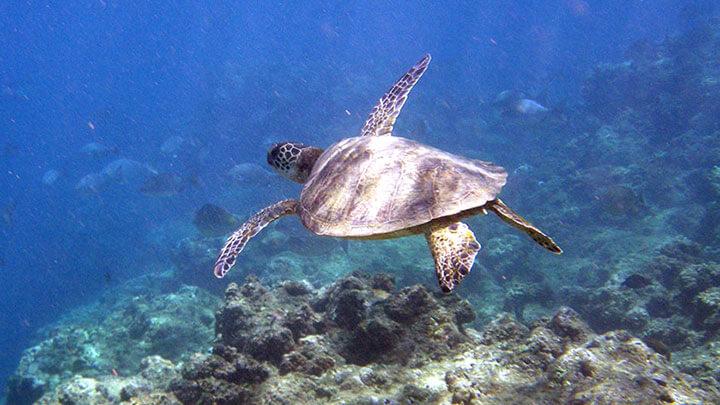 Anini Beach Snorkeling