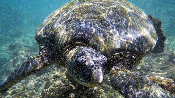 Hideaways Beach Snorkeling On Kauai