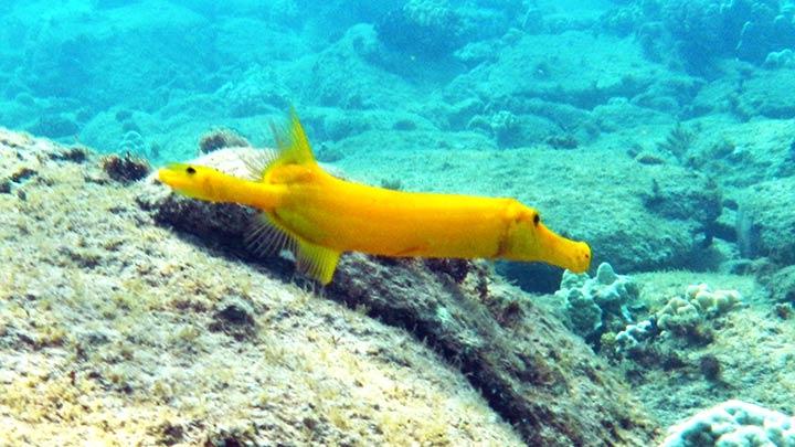 Snorkeling Kapalua Bay
