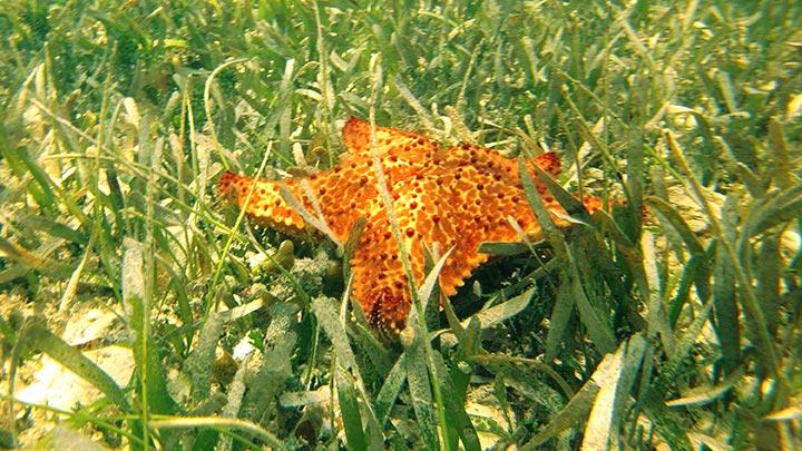 Higgs Beach Snorkeling Off Key West
