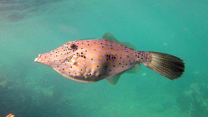 Rock Key Snorkeling Off Key West