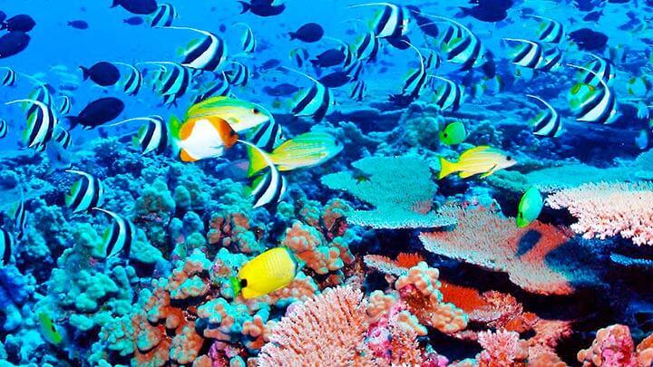 Snorkeling In Mauritius