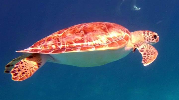 Isla del Cano Snorkeling