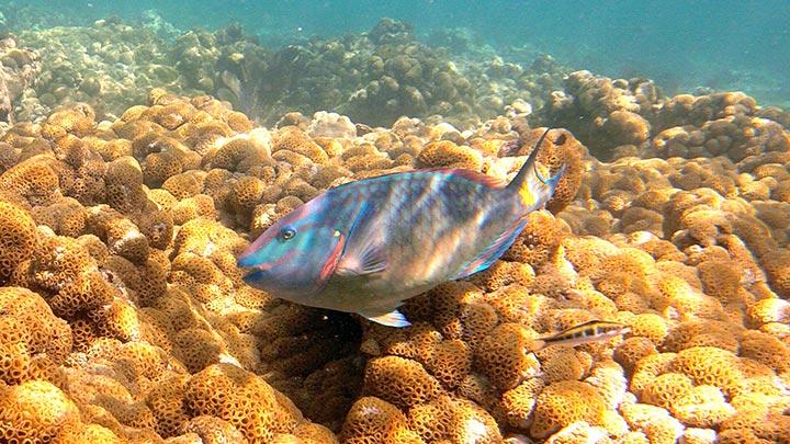 Dry Rocks Snorkeling Off Key West