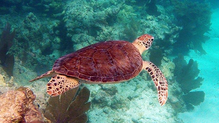 Sand Key Snorkeling Off Key West