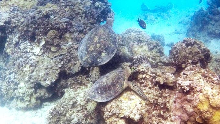 Snorkeling Off Molokai