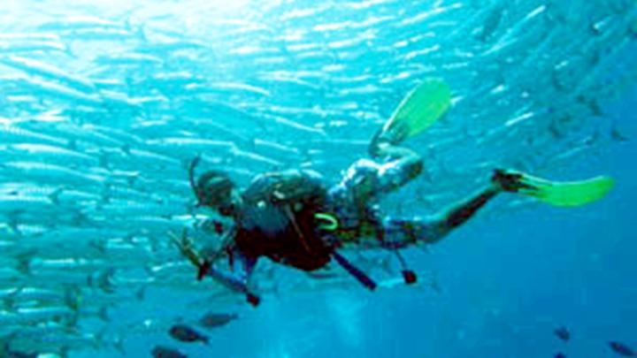 Sipadan Island Snorkeling