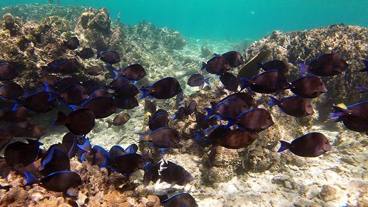 Snorkeling West Bay, Roatan