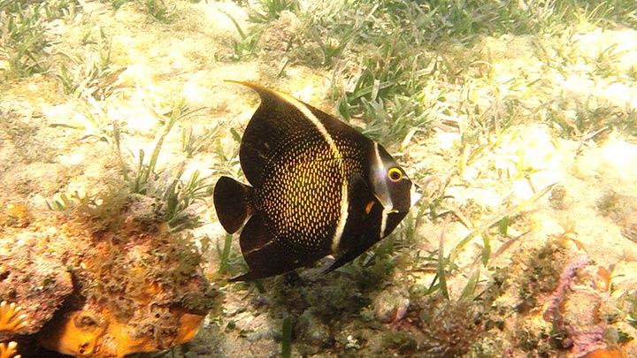 Snorkeling Tabyanna Beach, Roatan