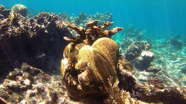 Snorkeling Divemasters Choice, Roatan