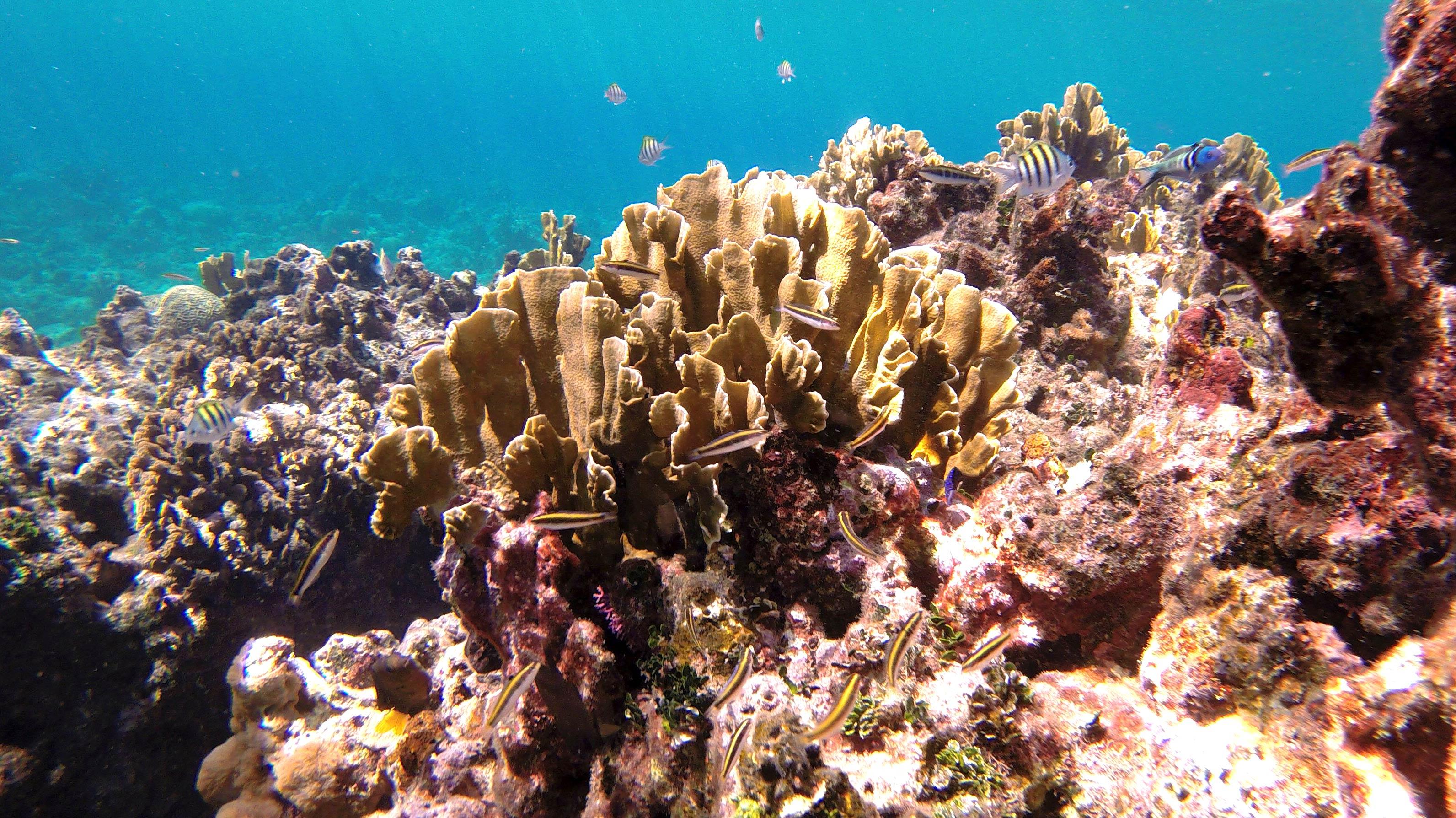 Snorkeling Lighthouse Reef, Roatan