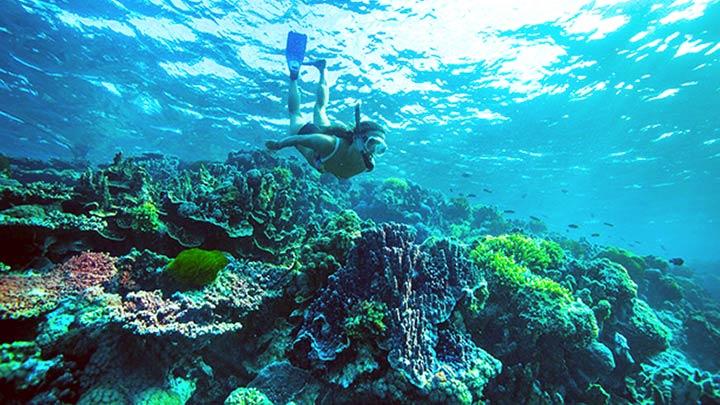 Lord Howe Island Snorkeling