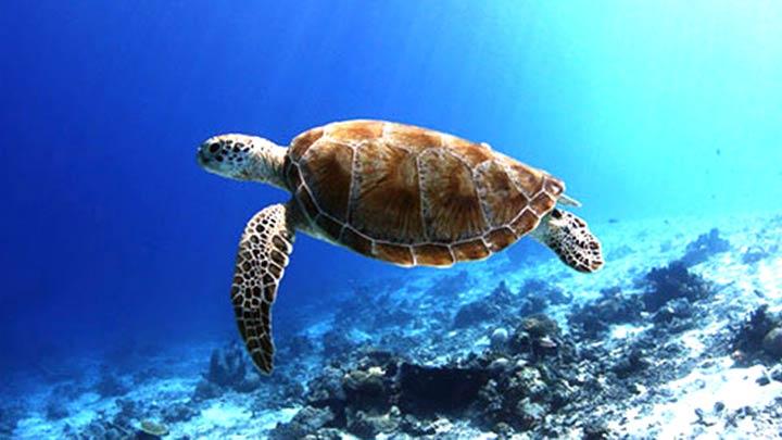 Pulau Matakin Snorkeling
